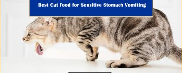 Cat Food for Sensitive Stomach Vomiting