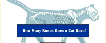 How Many Bones Does a Cat Have