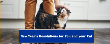 New Year Resolutions Your Cat