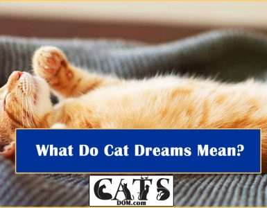 What Do Cat Dreams Mean
