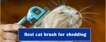 best cat brush for shedding